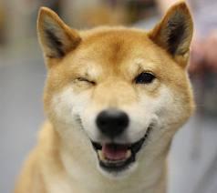 Wink Dog