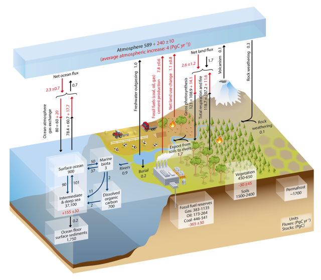 Carbon Cycle IPCC